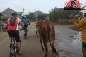 Mekong Bike Tour